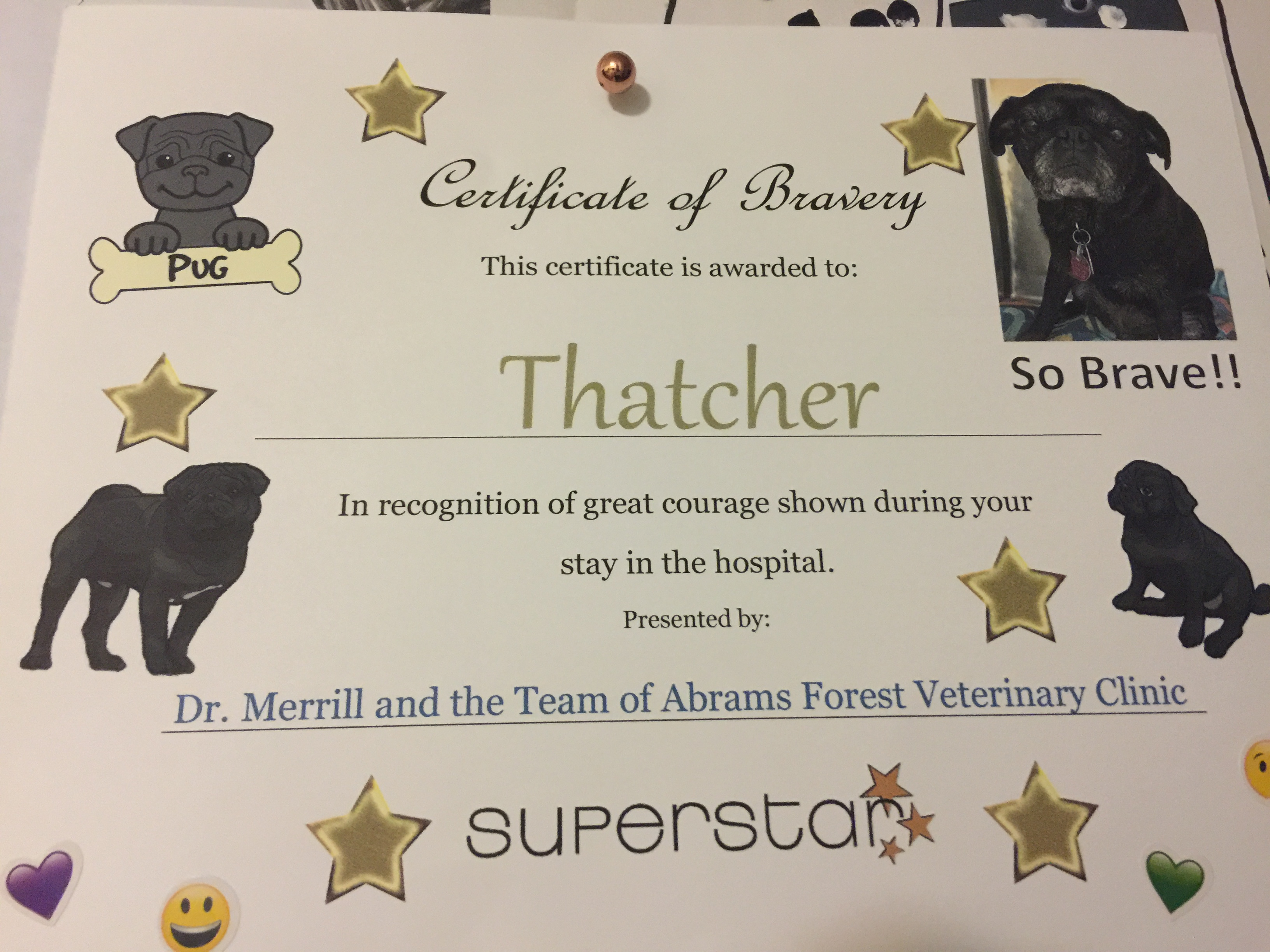 b5a7f7dcd8b9 This next statement should be obvious but Thatcher is dog and therefore she  is illiterate. She also probably can t grasp the concept of bravery.